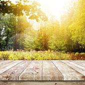Beautiful sunlight in autumn forest — Stock Photo