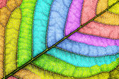 Colored leaf close-up — Stock Photo