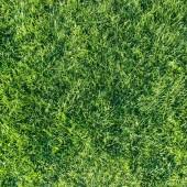 Green natural  grass — Stock Photo