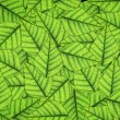 Green leaf close-up background — Stock Photo #69230021