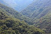 National forest in California — Stock Photo