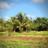 Cuba field — Zdjęcie stockowe