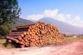 Lumber logs — Stock Photo