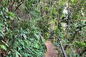 Floresta tropical no Brasil — Fotografia Stock