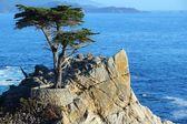 Lone Cypress — Stok fotoğraf