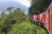 Brazil jungle train — Stock Photo