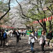Ueno Park Cherry Blossom — Stock Photo