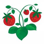 Ripe strawberries with leaves — Stock Vector