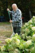 Senior man raking the grass — Stock Photo