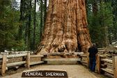 General Sherman Tree, — Stock Photo