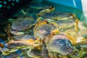 Lively crabs on a pool — Stock Photo