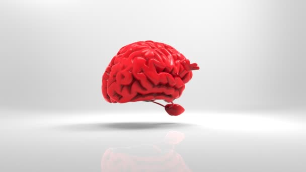 Cerebro de Zen — Vídeo de stock
