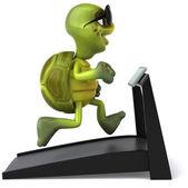 Fun turtle on treadmill — Stock Photo