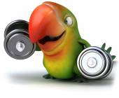 Parrot with dumbbells — Foto Stock