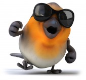 Robin  with sunglasses — Stock Photo