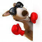 Fun kangaroo  in boxing gloves — Stock Photo #58577487