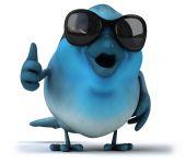 Fun blue bird in sunglasses — Stock Photo