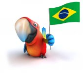 Fun parrot with Brazilian flag — Stock Photo