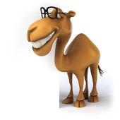 Fun camel in glasses — Stock Photo