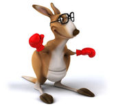 Kangaroo with red boxing gloves — Stock Photo