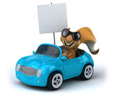Fun squirrel in a car — Stock Photo