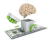 人間の脳とドル紙幣 — ストック写真