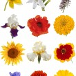 Flower collection, isolated on white background — Stock Photo #67840075