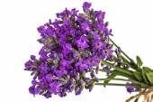 Bouquet of violet wild lavender flowers in dewdrops and tied wit — Stock Photo
