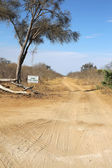 Chobe Forest Reserve — Stock Photo