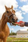 Horse and watermelon — Stock Photo