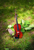 Violin on a grass and green leaves around — Stock Photo