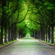 Country road running through tree alley — Stock Photo #65668391