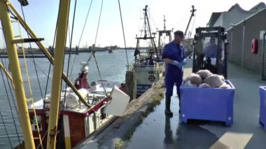 Unloading catch yield of shrimps — Stock Video