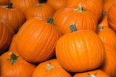 Pumpkin background — Stock Photo