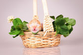 Tiny kitten in basket — Stock Photo