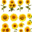 Sunflowers collection  — Stock Photo #54287217