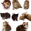 Collection of playful kittens — Stock Photo #55042775