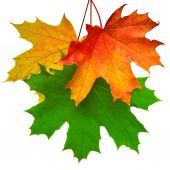 Branch with autumn maple leaf  — Stock Photo