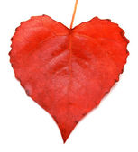 Red leaf heart — Stock Photo