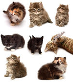 Collection of playful kittens  — Stock Photo