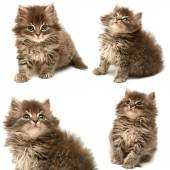 Collection of beautiful persian cat — Stockfoto
