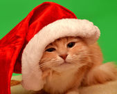Christmas cat with Santa Claus hat — Stock Photo