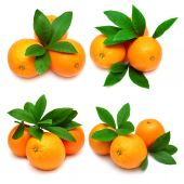 Collection oranges with leaves — Stock Photo