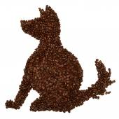Dog of coffee beans — ストック写真