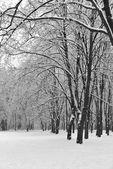 Overcast winter day — Foto de Stock