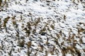 Winter background with grass — Stock Photo