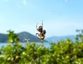 Spider on cobweb  — Stock Photo