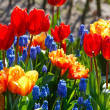 Multicolored flowers on spring flowerbed. — Stock Photo #57019981