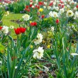 Spring flowerbed (closeup) — Stock Photo #60906389