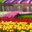 Spring yellow tulips and varicolored hyacinths — Stock Photo #61317063